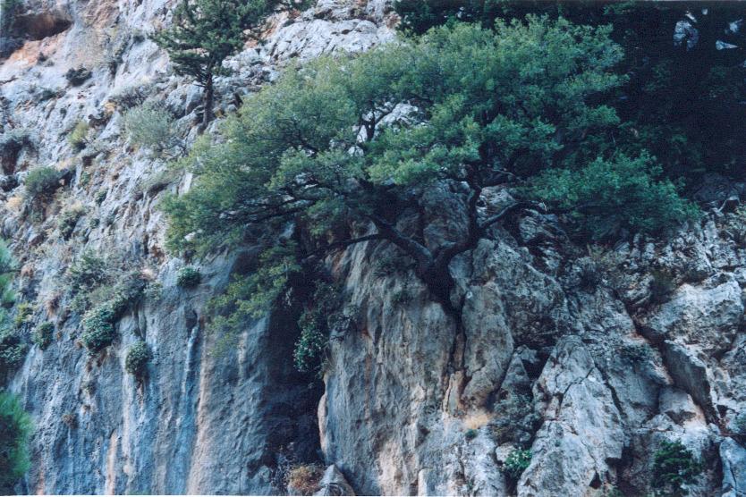 ag.irini36