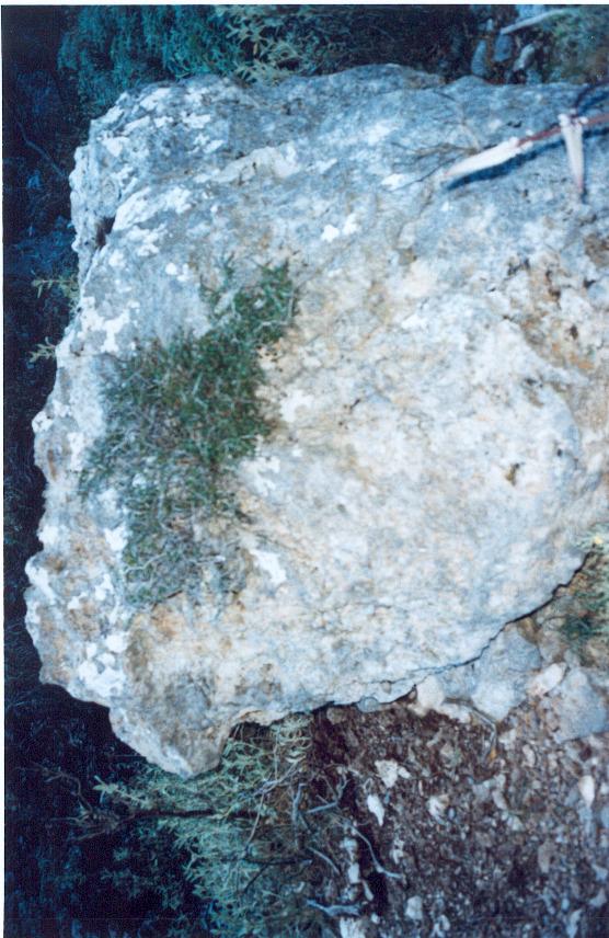 ag.irini41