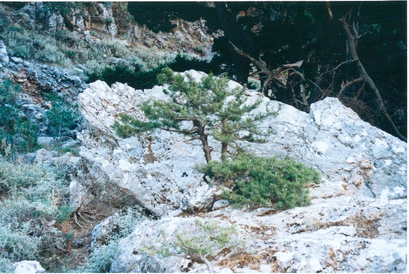 ag.irini43