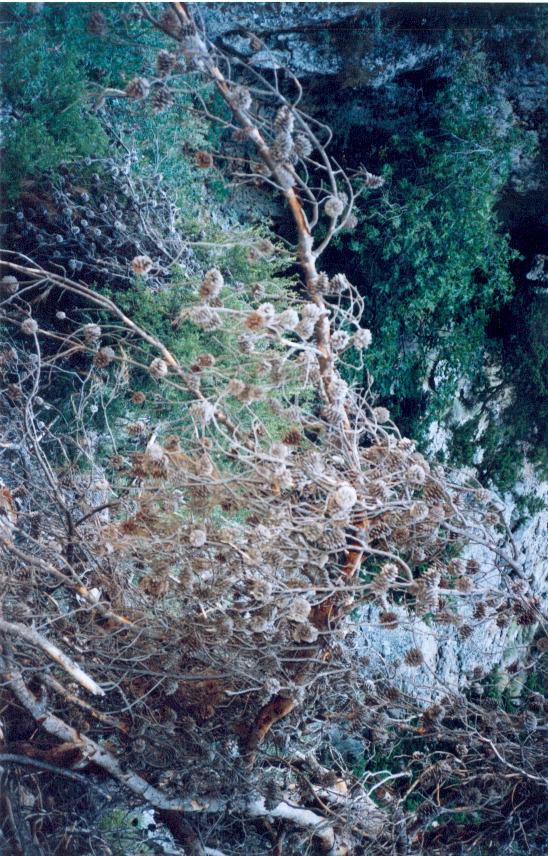 ag.irini64