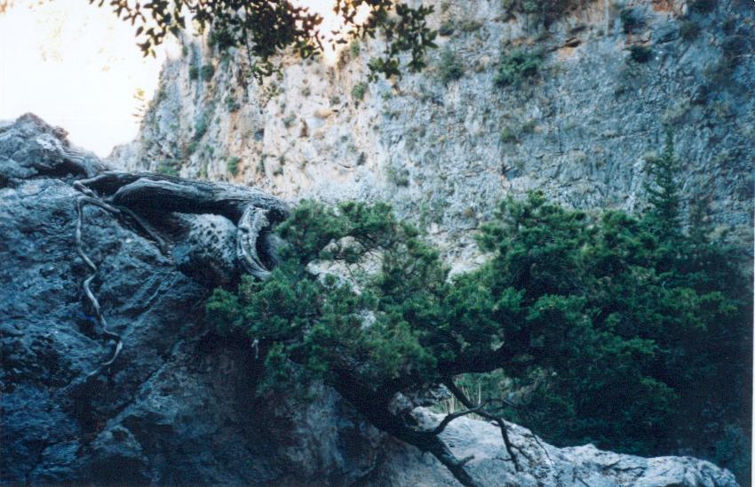 ag.irini65